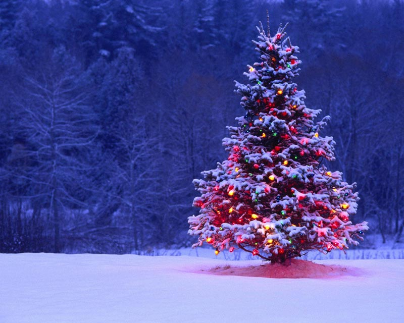 Immagini Albero di Natale: Albero di Natale innevato