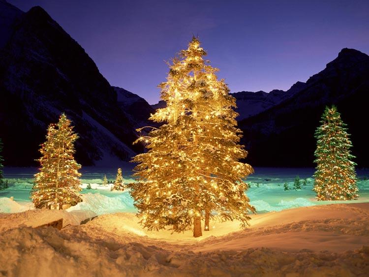 Immagini Albero di Natale: Alberi di Natale luminosi