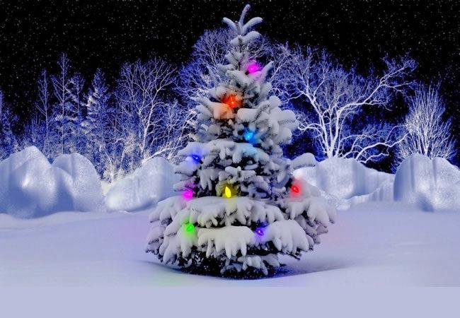 Immagini Albero di Natale: Albero di Natale addobbato