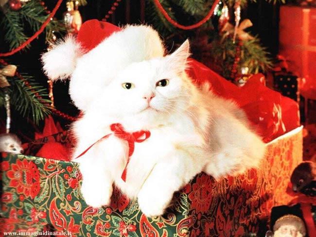 Immagini di Natale Immagine Gatto di Natale