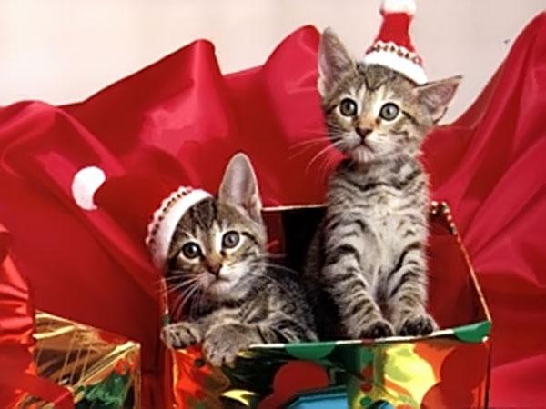Immagini di Natale Gattini di Natale