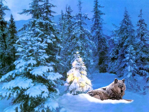 Immagini di Natale Immagini Natalizie lupo